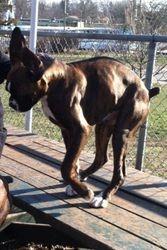 Zaire Baby Hagen 4 months