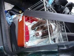 Millie Pup