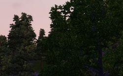 Forest pic by pinkkittyrokz