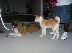 Katana met a new friend