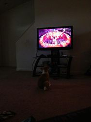 Watching the Olympics opening ceremony