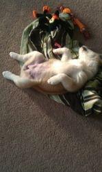 Sleeps on her back