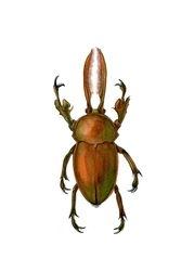Neolamprina adolphinae