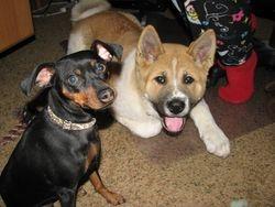 Kain and Roxy