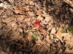 flower I found hiking.