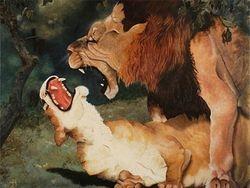 Lion taking advantage of female in estrus.
