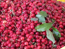 Italian Cherries