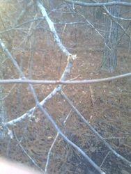 Branch broken above scrape - 12-30-11