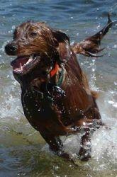 Swim, Swim