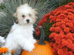 Murphy at 12 weeks