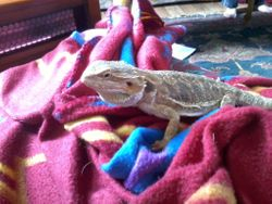 my newww favorite spot on MINE blanket in front of the heater