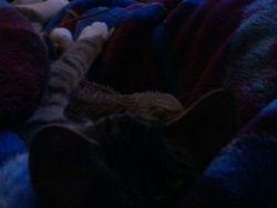new best friends haveing a sleep over
