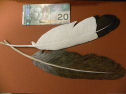 Pair Of Eagle Feathers