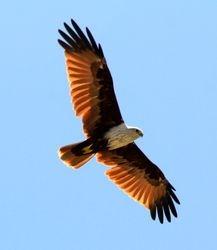 Eagles at Maalu Maalu Resort, Kalkudah
