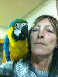 SYD the Macaw, at 4 1/2 months old