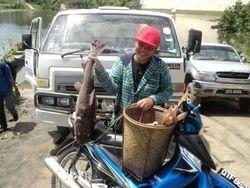 Ikan Besar di Bakun
