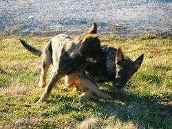 A little puppy play