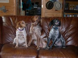 Beulah, Sage & Buckshot on the Good Couch