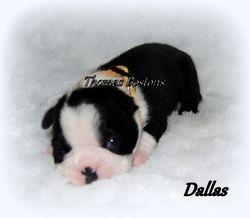 Eva's Puppy