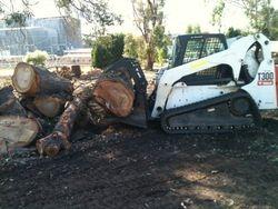bobcat removing trees