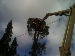 elevated work platform tree removal