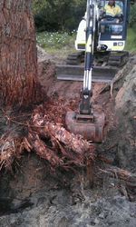 removing trees roots and all