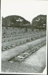 WWII POW Cemetary of men who worked on the River Kwai Bridge