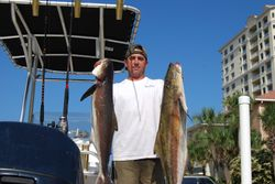 2010 cobia off the Rays
