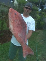 BIG Snapper from ???