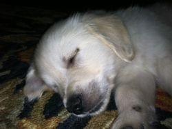 Finally! A nap!