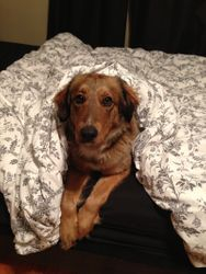 ready for bed