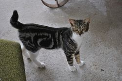 Bootz, Young Male