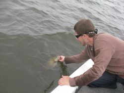 This fish was released unharmed