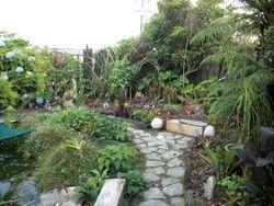 New bromeliad garden