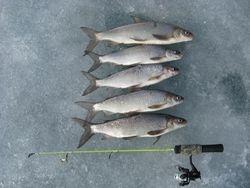Sylvan Whitefish 03/20/2010