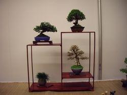 Shohin display