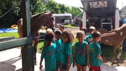 Field Trip to Show Class Stables.