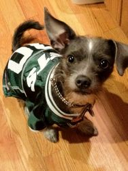Go Jets