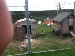 hen and duck house