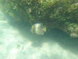 Snorkelling at Nacoscolito-2