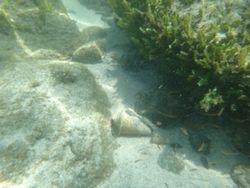 Snorkelling at Nacoscolito-3