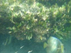 Snorkelling at Nacoscolito-5