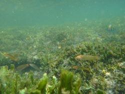 Snorkelling at Nacoscolito-7