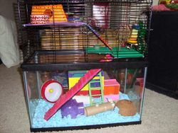 Tater & Twitch's Home