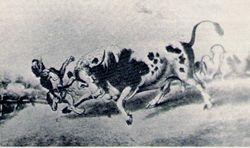 Bull Baiting. c1800s