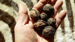 an odd nut