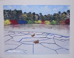 Powring Park Duck Pond