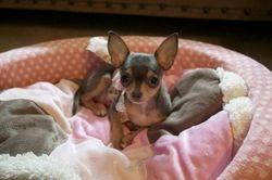 Chloe in her bed 1