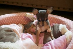 Chloe in her bed 2