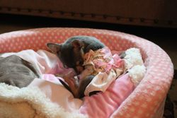 Chloe in her bed 3